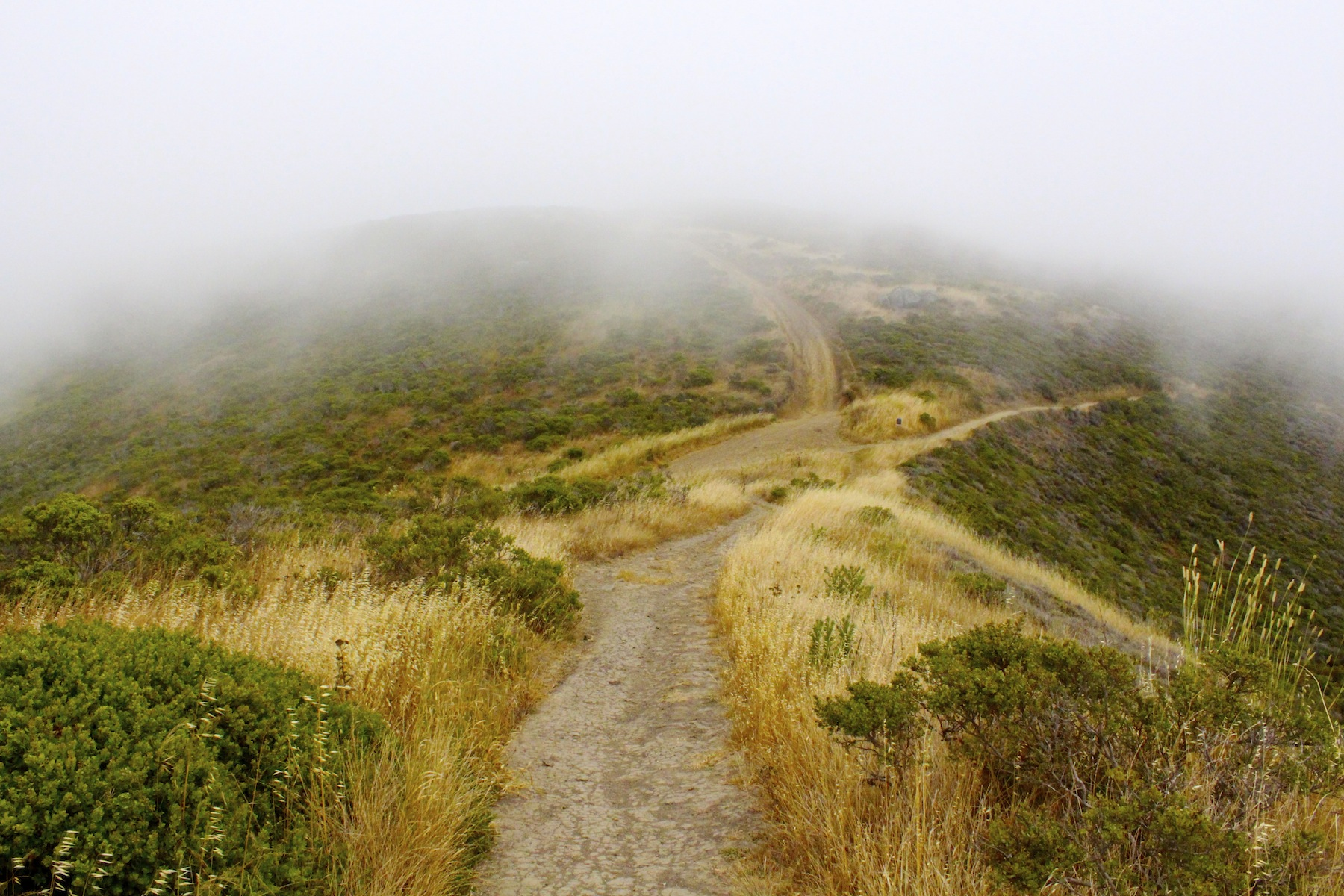 """The path was made to be traveled"" in Muir Beach/Marin Headlands, California"